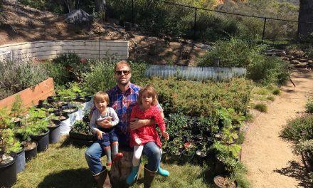 Cody Petterson – the pine valley is lost