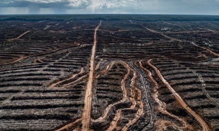UN Report On Biodiversity Loss 2019