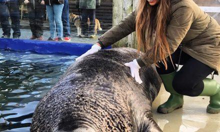 Hannah s01e04 @ Cornish Seal Sanctuary, Ambassador!
