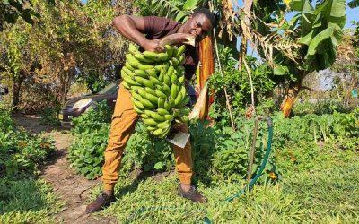 LuwayoPPI Ep.70 – 142 Bananas
